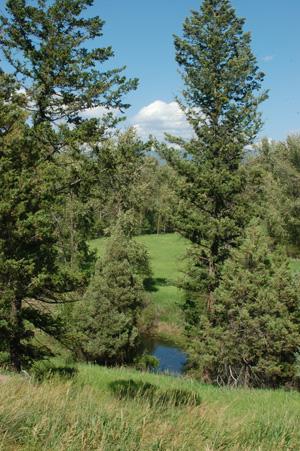 montana-july-08-80.jpg