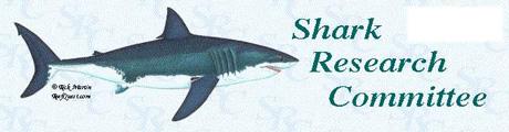 shark-link.jpg