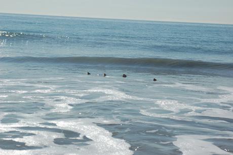 110109-beach-0.jpg