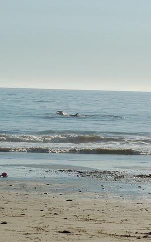 110109-beach-76.jpg
