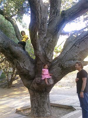 tree-pix.jpg